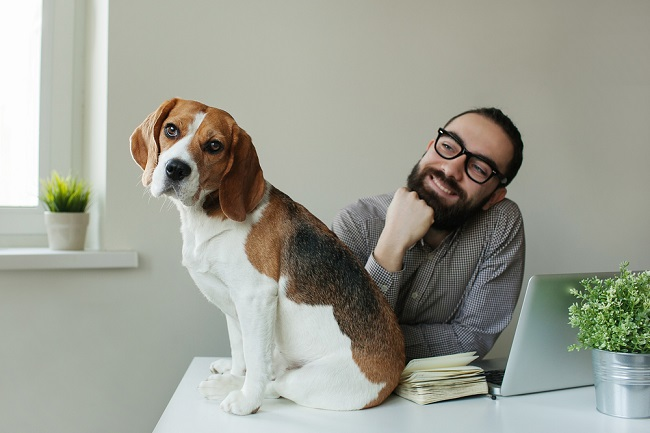 What your dog's breed says about your working style